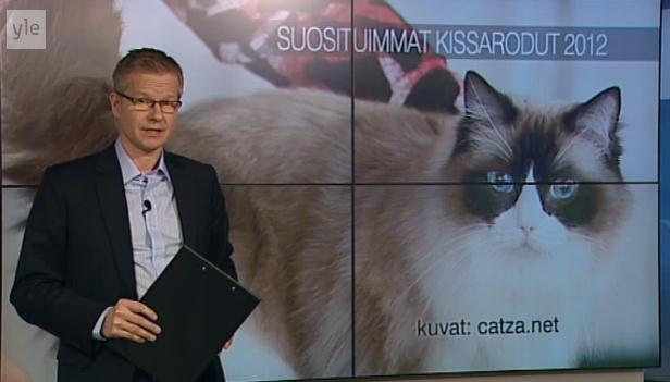 Raisa Ylen AamuTV:n ragdolleista kertovan ohjelman taustakuvana 9.1.2013.