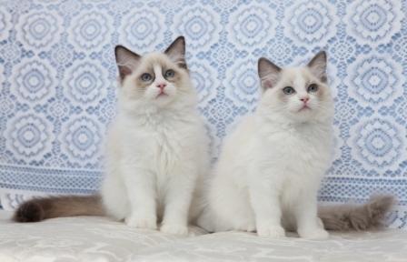 Tytti ja Teemu
